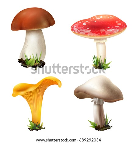 realistic mushrooms set of four