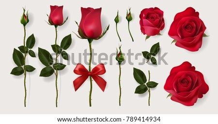 realistic of red roses and
