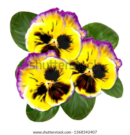 realistic pansy vector flower