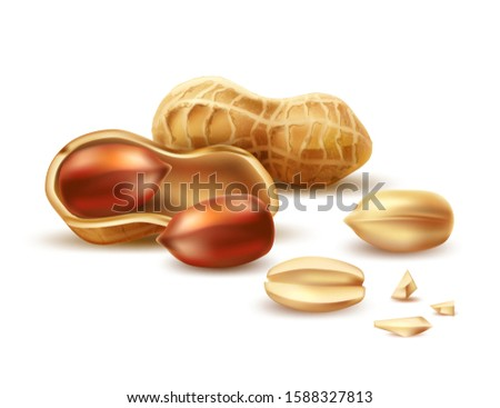 Realistic peanut in nutshell, kernels and peeled halves. Vector 3d nuts for organic product package design. Raw groundnut seeds for healthy diet. Natural products.