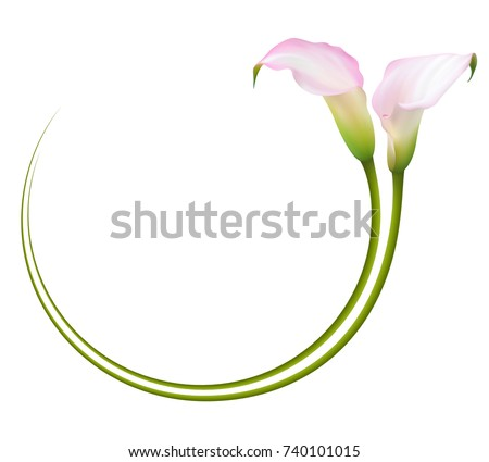 Free Calla Lily Vector Download Free Vector Art Stock Graphics
