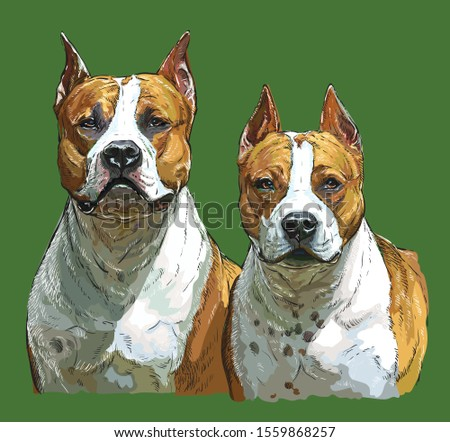 realistic portrait of two dogs