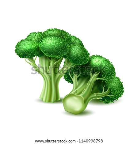 Realistic raw broccoli cabbage. Ripe green vegetable full of nutritions and vitamins, juicy fresh cooking ingredient. Vector 3d healthy vegetarian natural food, organic agriculture symbol