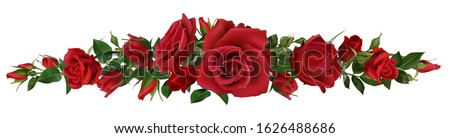 realistic red roses border