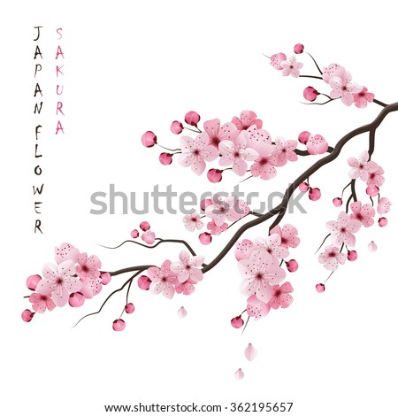 realistic sakura japan cherry