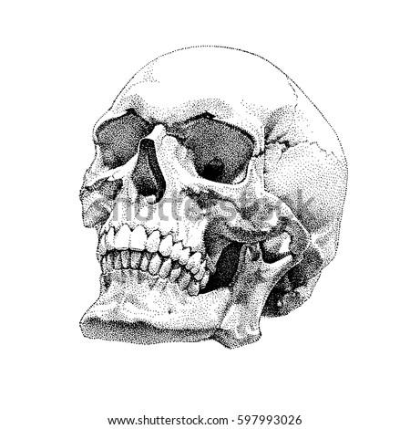 realistic skull vector design