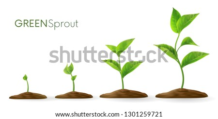 Realistic sprouts 3D.Phases plant growing.Evolution concept.  Seeds sprout in ground. Sprout, plant, tree growing agriculture icons. Vector illustration isolated on white background.