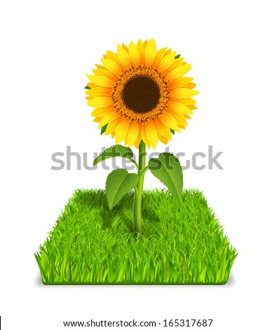 realistic sunflower in the
