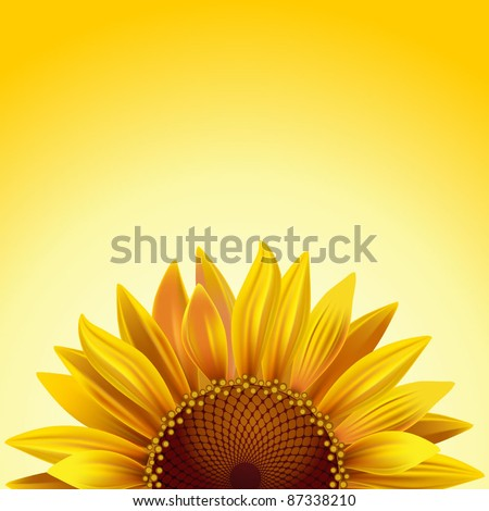 realistic sunflower on a sunny