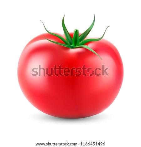Realistic  tomato. Vector #1166451496