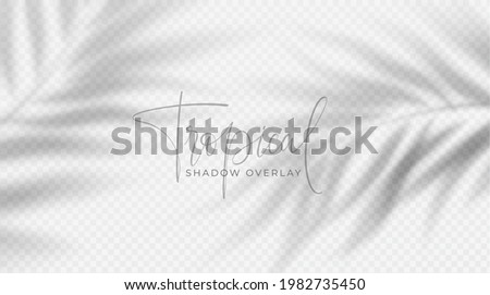 Realistic transparent shadow from a leaf of a palm tree on the white background. Tropical leaves shadow. Mockup with palm leaves shadow. Vector illustration EPS10
