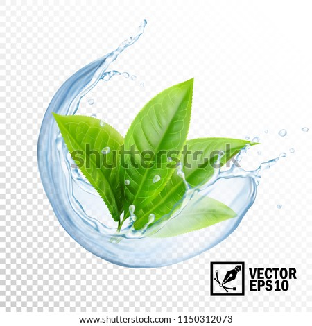 Realistic transparent vector splash of water with leaves of tea or mint. Editable handmade mesh