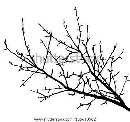 Realistic tree branches silhouette (Vector illustration)