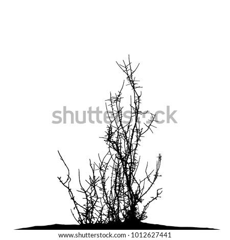 realistic tree silhouettethe