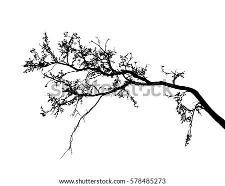 realistic tree silhouette