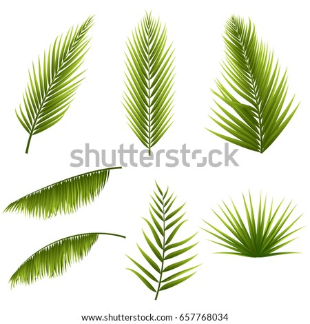 Realistic tropical green palm leaves set isolated on white background. Exotic jungle flora. Elements for your design. Vector illustration. Eps 10