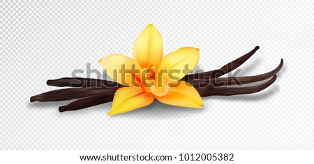 Realistic vanilla flower and pods, vector isolated objects on transparent background