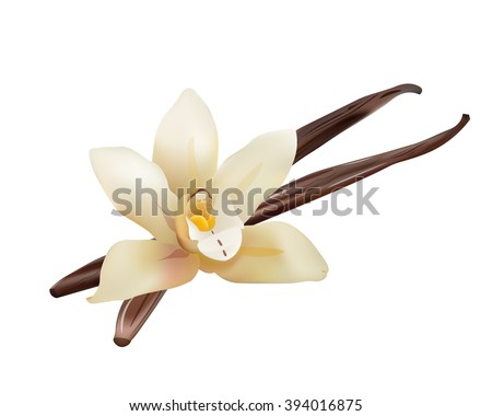 Realistic Vanilla Flower and Sticks. Vector Isolated Icon Illustration