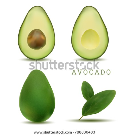 realistic vector avocados illustration. Whole and cut avocado isolated on white background. bright vector set of colorful half, slice and whole of fresh avocado.