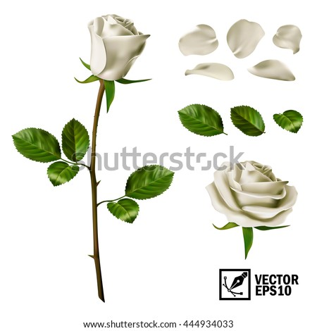 Realistic vector elements set of white roses (petals, leaves, bud and an open flower) with the ability to change the appearance of the flower, as in the constructor