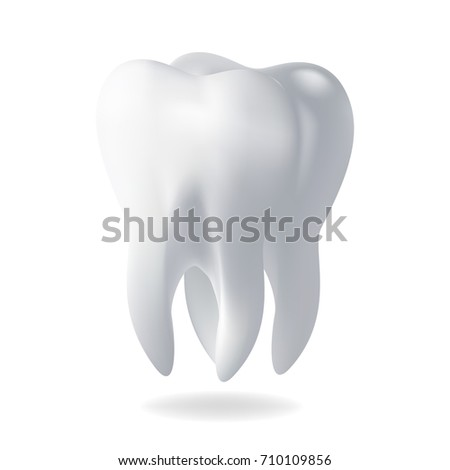 Realistic Vector Illustration Human Tooth Template Design Element