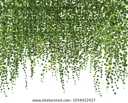 realistic vector ivy plant isolated on white background. Floral design elements. ivy wall background. greenery vector illustration. climbing plant leaves. texture background card website banner