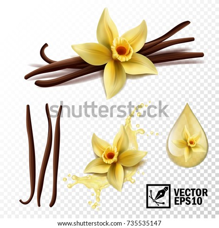 Realistic vector set of isolated elements (vanilla flower and pods or sticks, vanilla splash and drops)