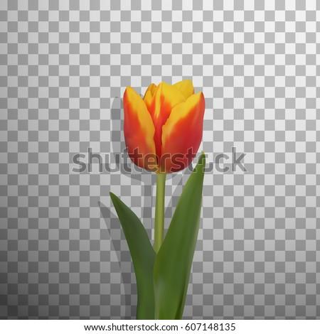 realistic vector spring