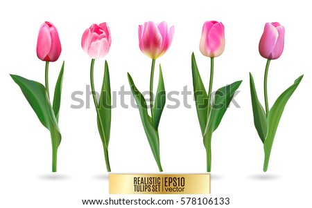 realistic vector tulips set