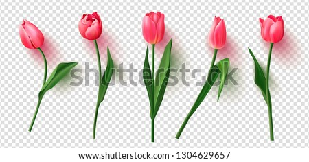 Realistic vector tulips set on transparent background.Vector illustration.