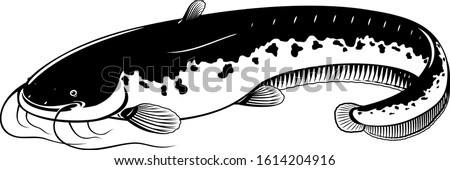 Realistic wels catfish in black and white isolated illustration, one big freshwater fish with long barbels and tail, bottom-dwelling fish Сток-фото ©