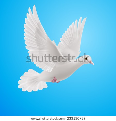 Realistic White Dove On Blue Background Symbol Of Peace Ez Canvas