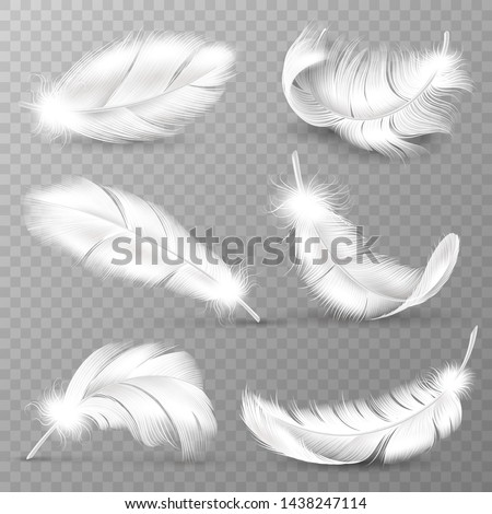 realistic white feathers birds