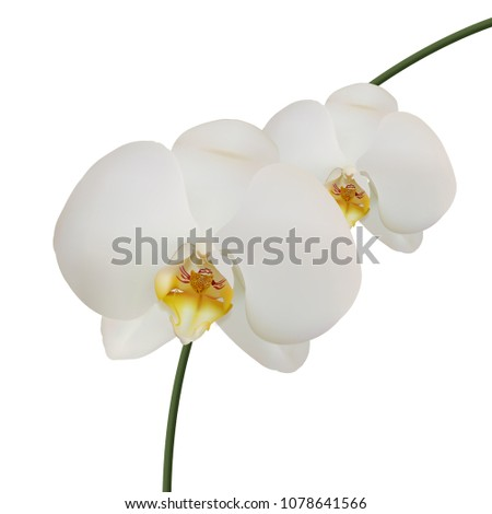 realistic white orchids on