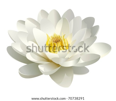 realistic white water lily