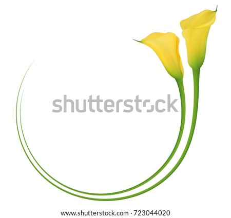 Realistic yellow calla lily circle frame. The symbol of Beauty and Grace.