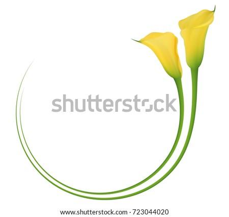 realistic yellow calla lily