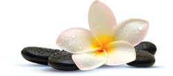 Realistic zen black stone with orchid
