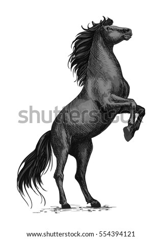 rearing horse isolated sketch
