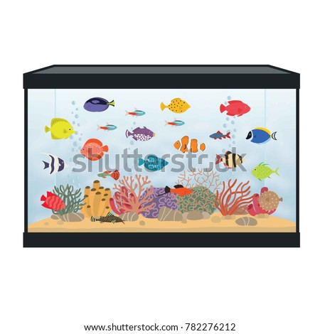 rectangular aquarium with
