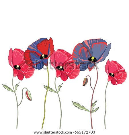 red and blue poppies vector