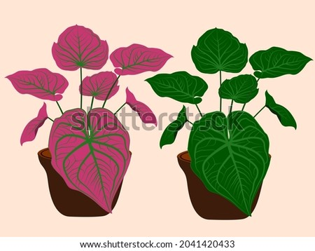 Red and green bons are potted plants for decoration. Foto stock ©