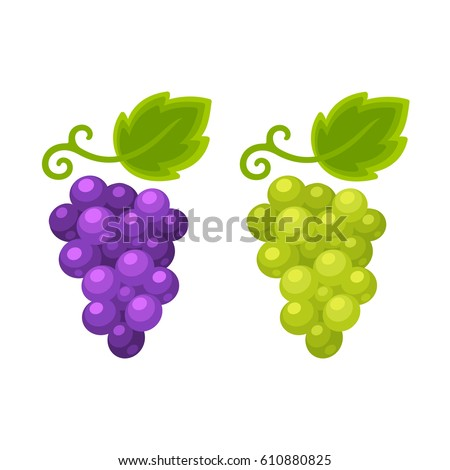 Red and white grapes isolated cartoon illustration, grape types set. Wine vector logo art.