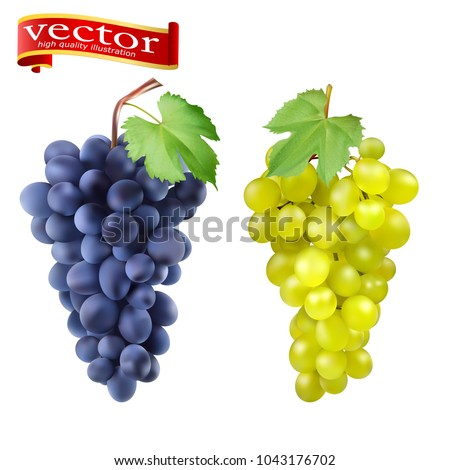 Red and white table grapes, wine grapes. Fresh fruit, 3d vector icon set. Bunch of grapes ripe, juicy, high detail vector