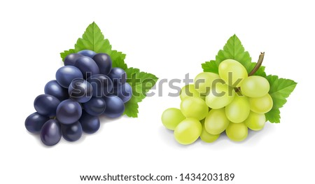 Red and white table grapes. Wine grapes realistic bunch vector icon set.