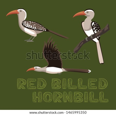 red billed hornbill cartoon