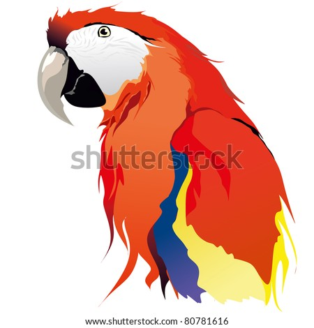 red blue Macaw parrot