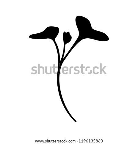 Red cabbage (organic microgreen)