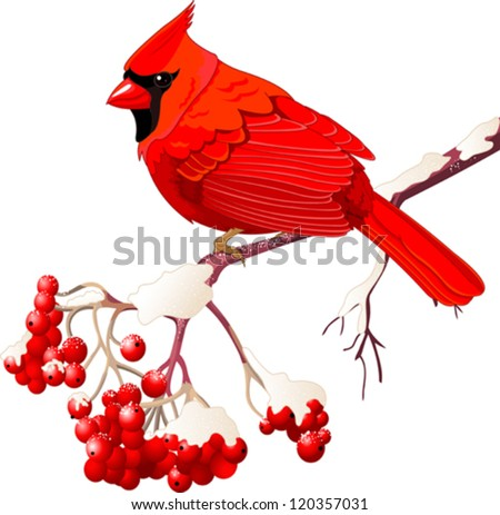 red cardinal bird sitting on
