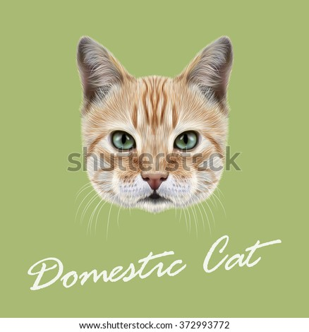 red cat vector illustrated